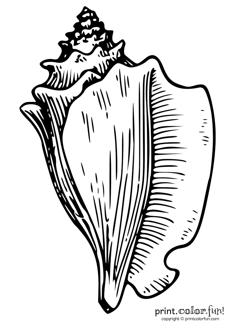 Conch coloring #15, Download drawings