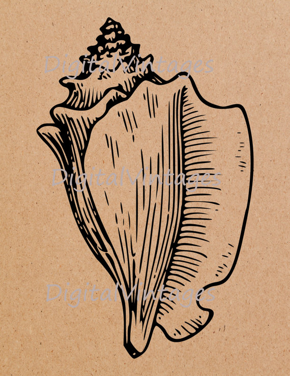 Conch svg #5, Download drawings