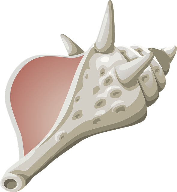 Conch svg #13, Download drawings