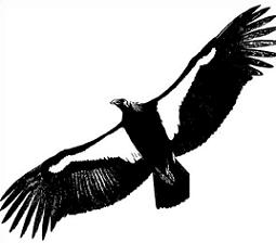 Condor clipart #20, Download drawings