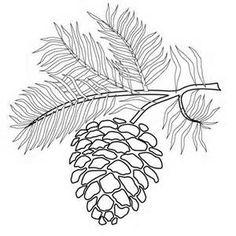 Pine Cone coloring #5, Download drawings