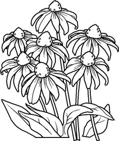 Cone Flower coloring #1, Download drawings