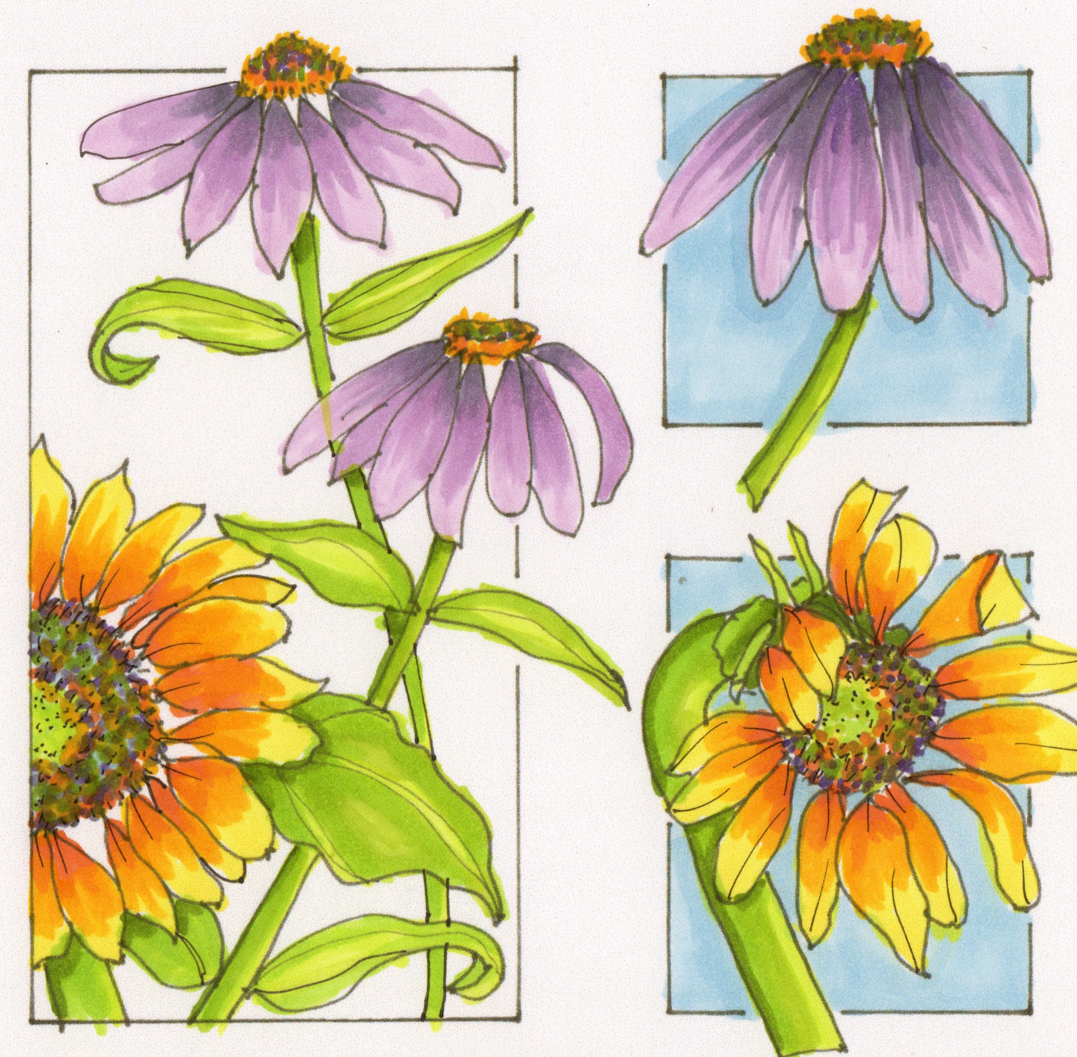 Coneflower coloring #12, Download drawings