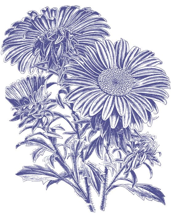 Coneflower svg #19, Download drawings