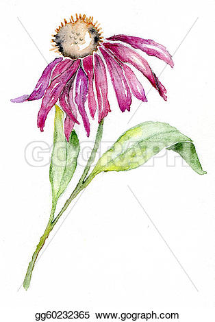 Coneflower clipart #5, Download drawings