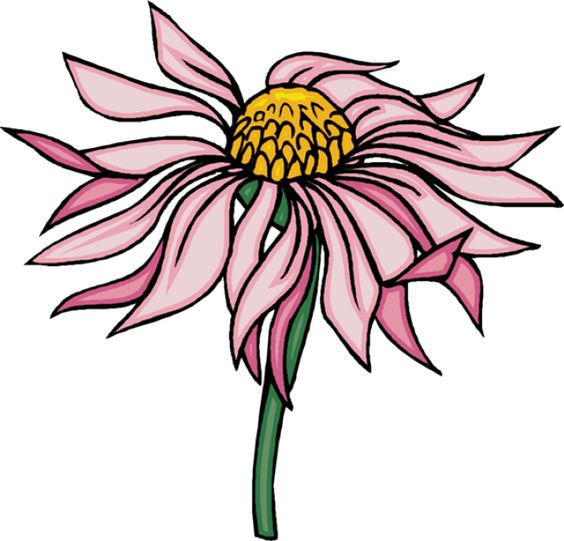 Coneflower clipart #15, Download drawings