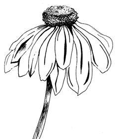 Coneflower coloring #11, Download drawings