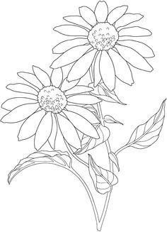 Coneflower coloring #9, Download drawings