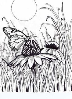 Coneflower coloring #4, Download drawings
