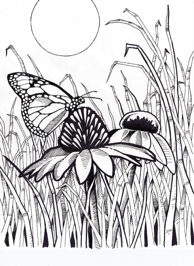 Coneflower coloring #14, Download drawings