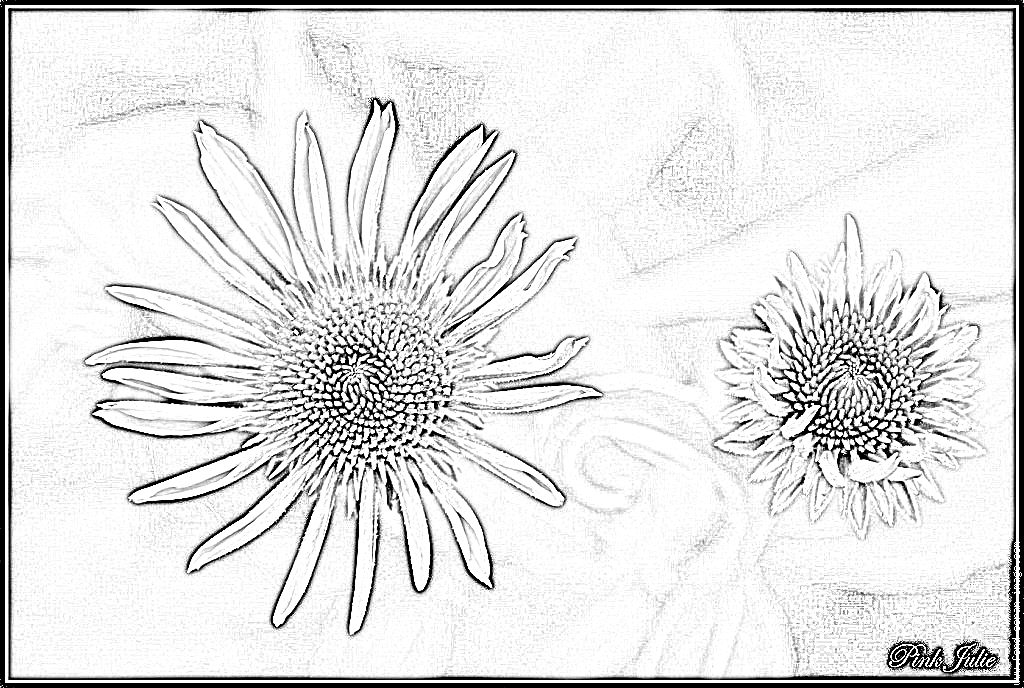 Coneflower coloring #1, Download drawings