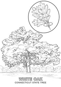 Connecticut coloring #16, Download drawings