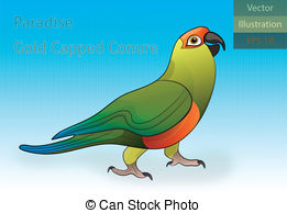 Conure clipart #20, Download drawings