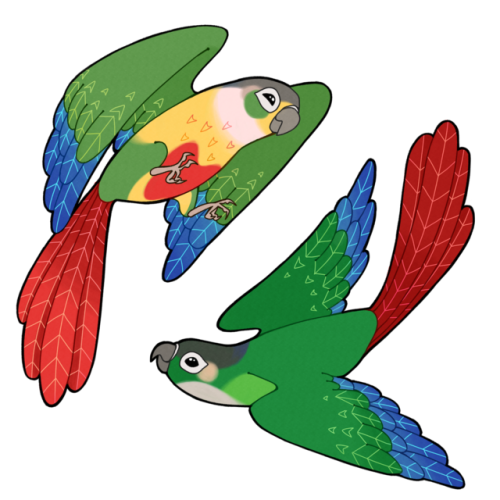 Conure clipart #14, Download drawings