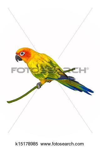 Sun Parakeet clipart #1, Download drawings