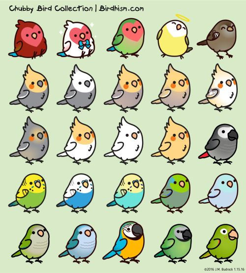 Conure clipart #4, Download drawings