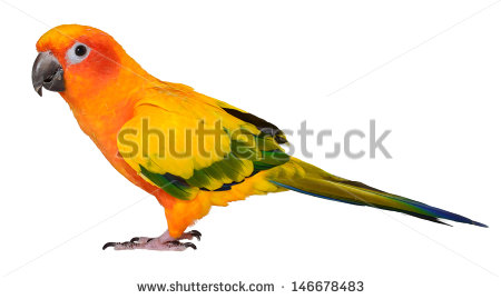 Sun Parakeet clipart #18, Download drawings