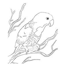 Conure coloring #3, Download drawings