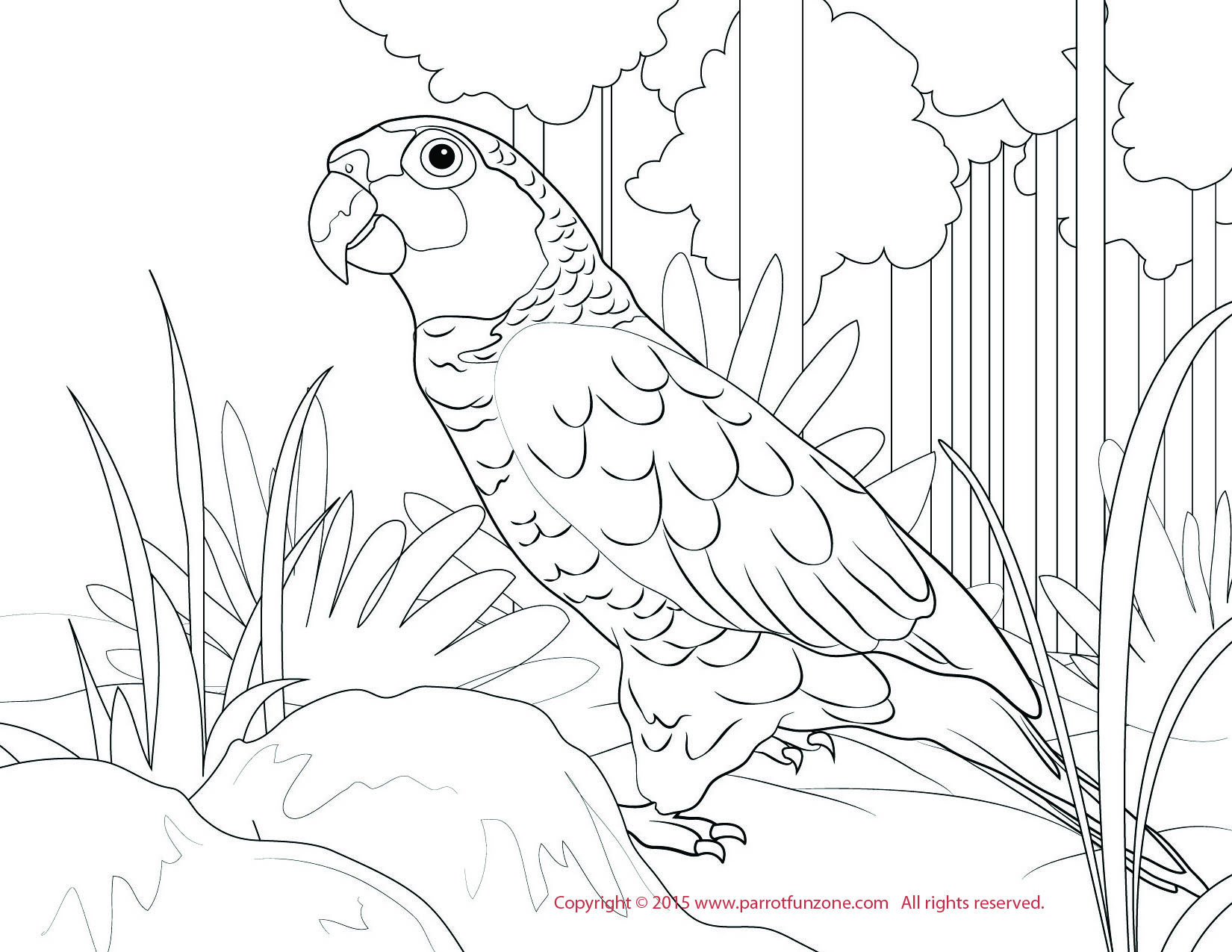 Red-lored Amazon coloring #20, Download drawings