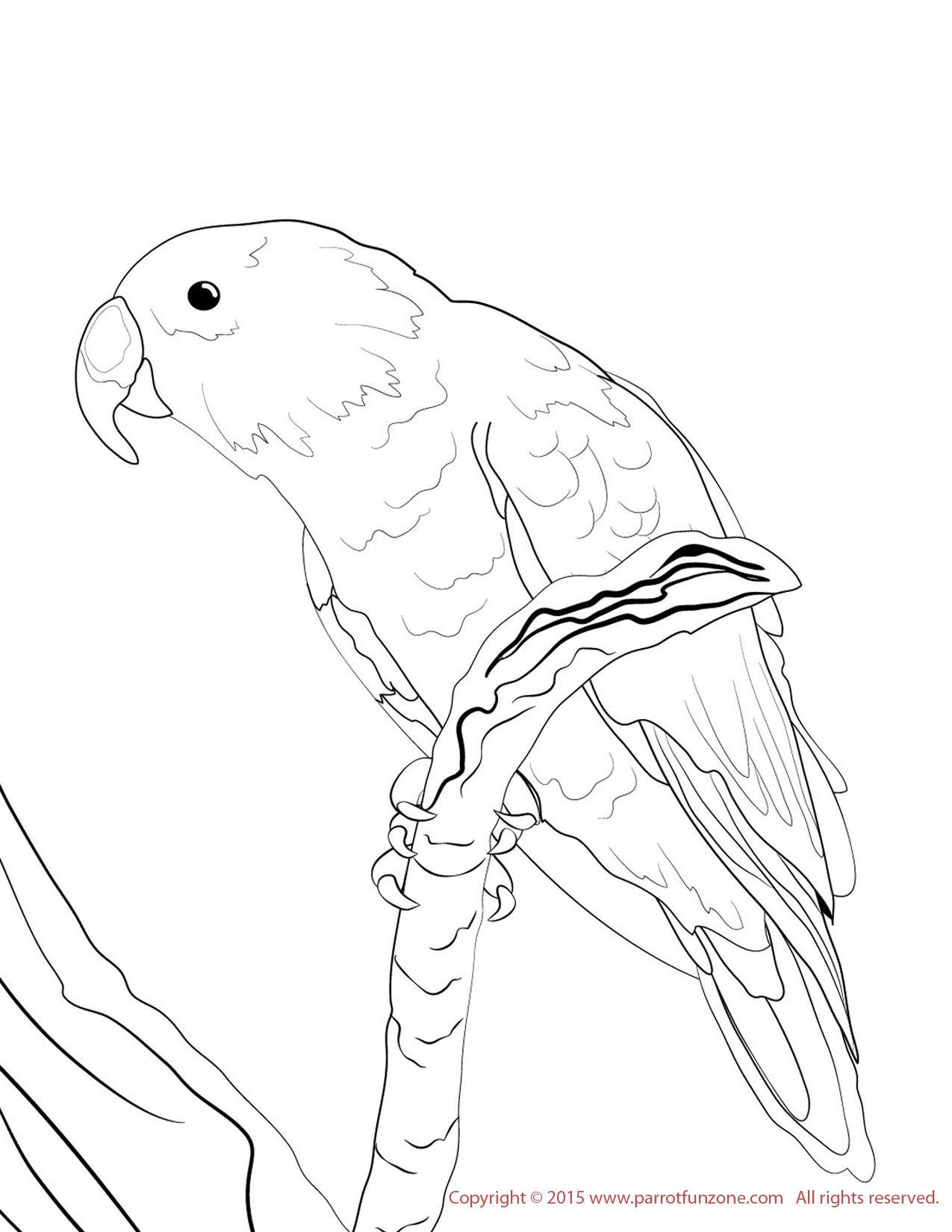 Conure coloring #12, Download drawings