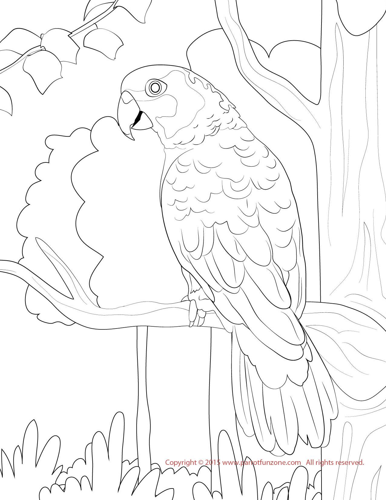Conure coloring #6, Download drawings