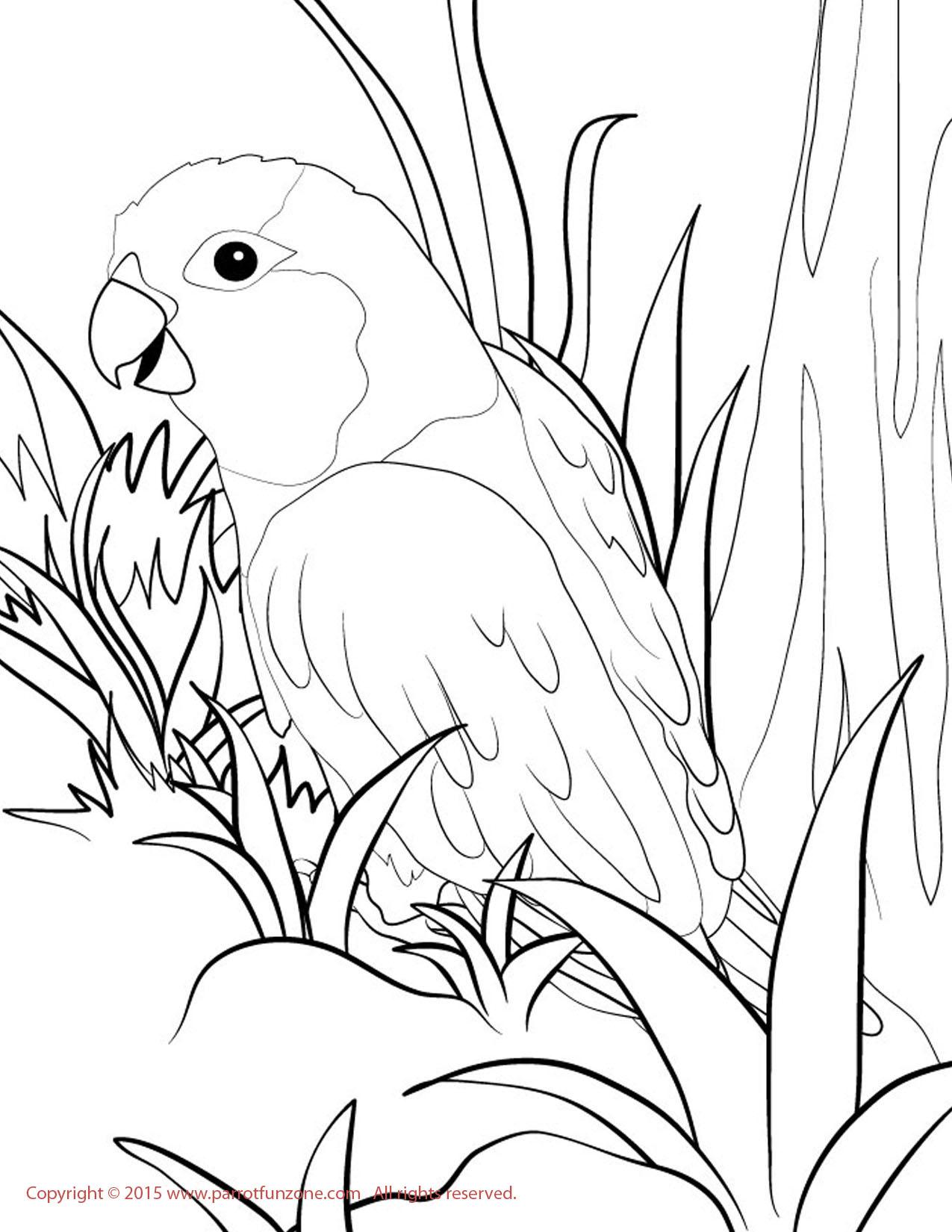 Conure coloring #18, Download drawings