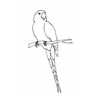 Conure coloring #17, Download drawings