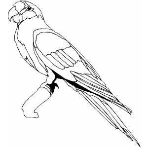 Conure coloring #14, Download drawings