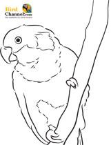 Conure coloring #16, Download drawings