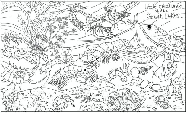 Cool coloring #1, Download drawings