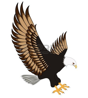 White-tailed Eagle clipart #20, Download drawings