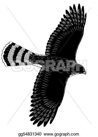 Cooper's Hawk clipart #17, Download drawings