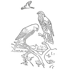 Cooper's Hawk coloring #6, Download drawings