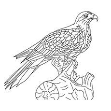 Cooper's Hawk coloring #13, Download drawings
