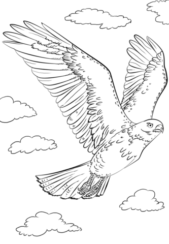 Cooper's Hawk coloring #10, Download drawings