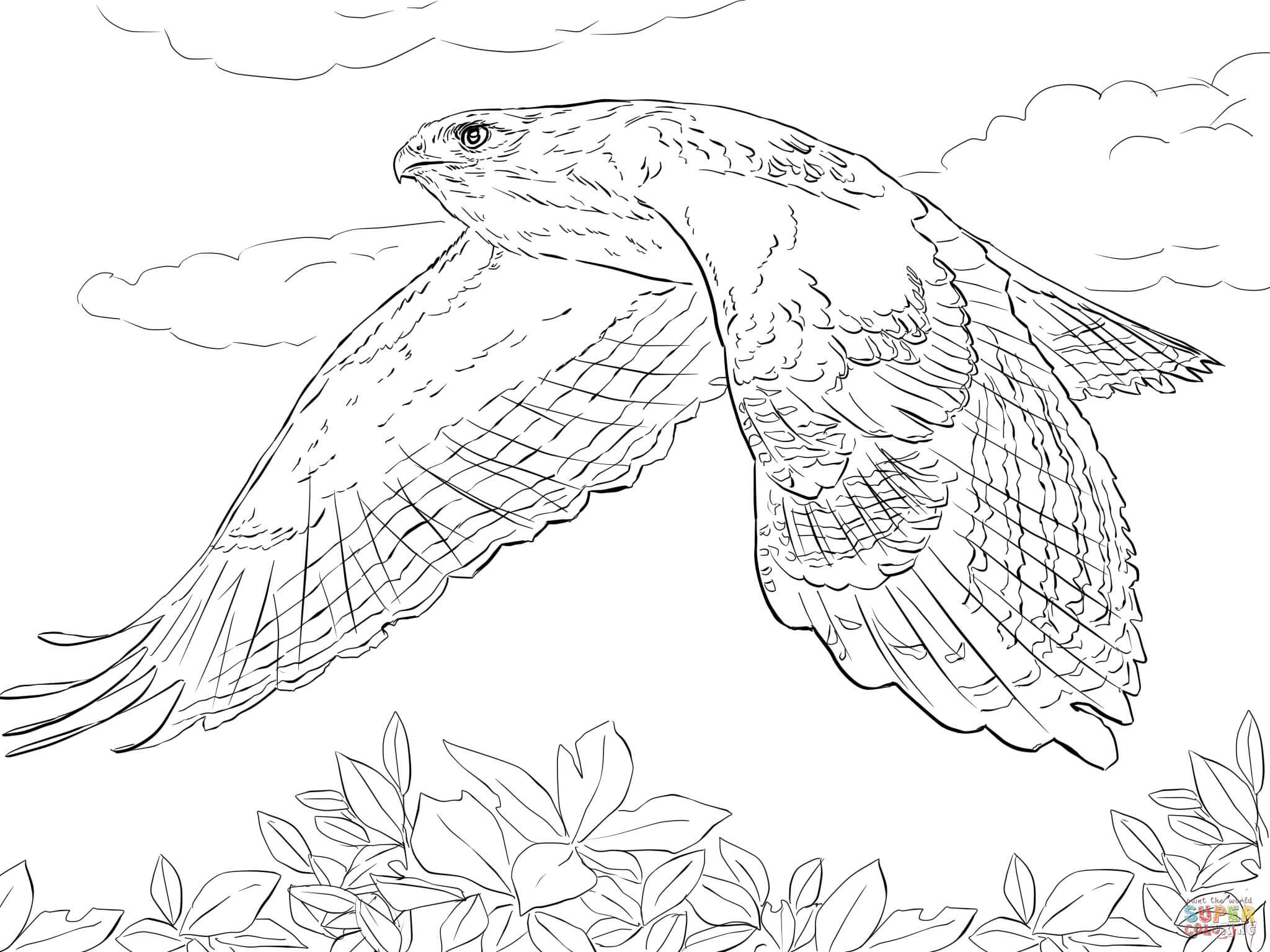 Cooper's Hawk coloring #7, Download drawings