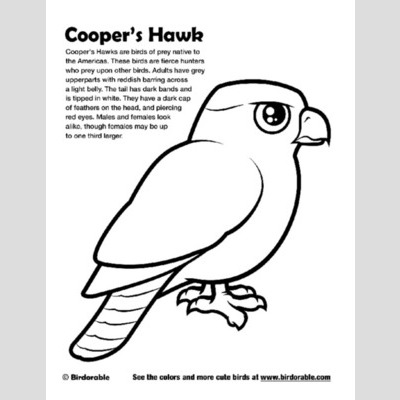 Cooper's Hawk coloring #2, Download drawings