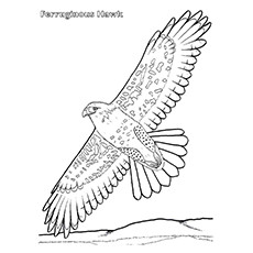 Cooper's Hawk coloring #11, Download drawings