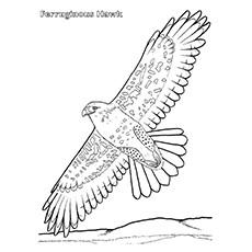 Cooper's Hawk coloring #10, Download drawings