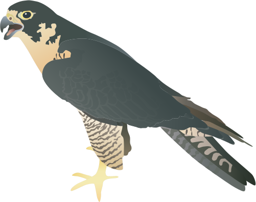 Prairie Falcon svg #19, Download drawings