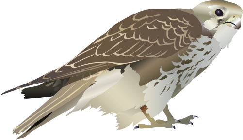 Prairie Falcon svg #20, Download drawings