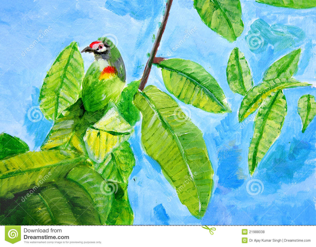 Coppersmith Barbet clipart #8, Download drawings
