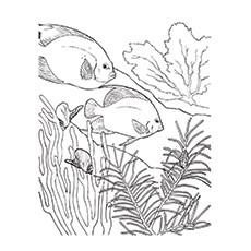 Coral coloring #4, Download drawings