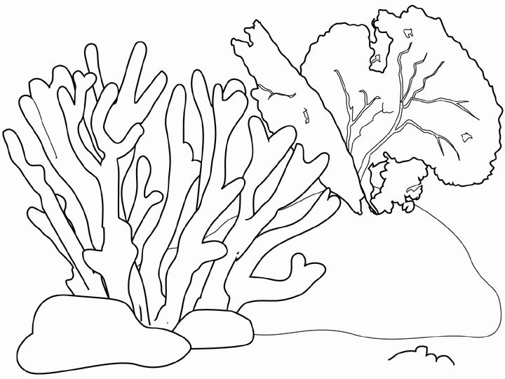 Coral coloring #12, Download drawings