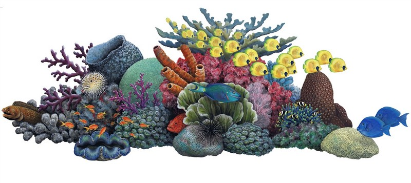 Coral Reef clipart #1, Download drawings