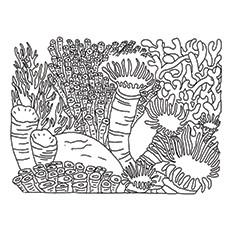 Coral Reef coloring #4, Download drawings