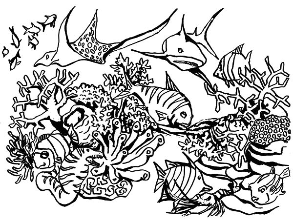 Coral Reef coloring #13, Download drawings