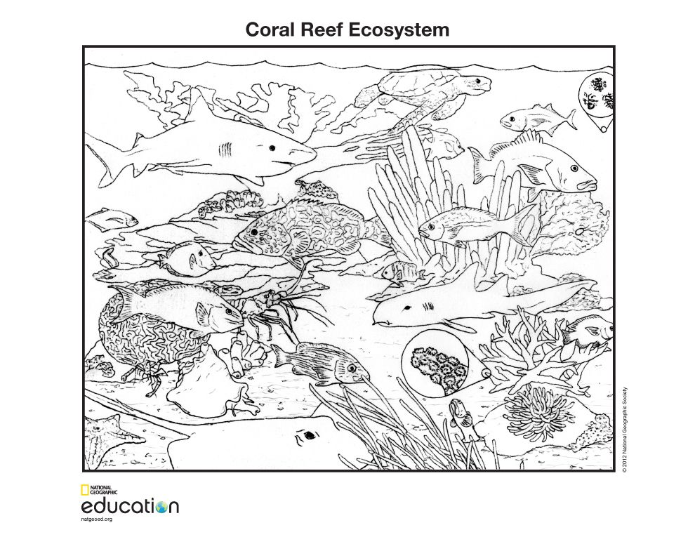 Coral Reef coloring #3, Download drawings
