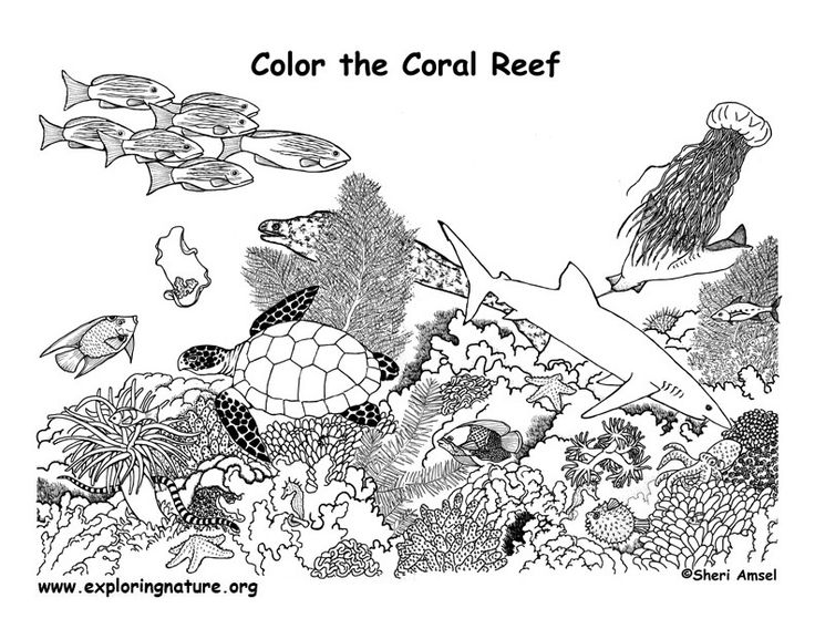 Coral Reef coloring #17, Download drawings
