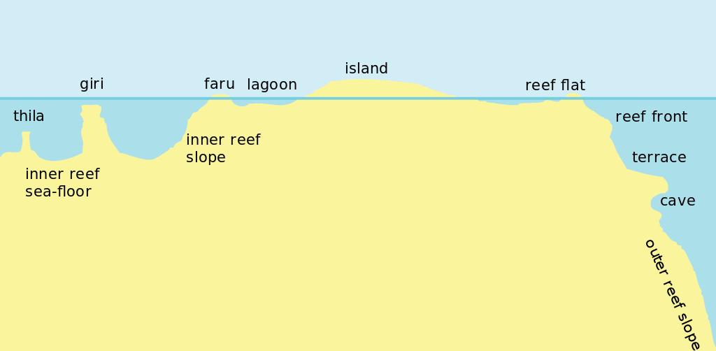 Coral Reef svg #7, Download drawings